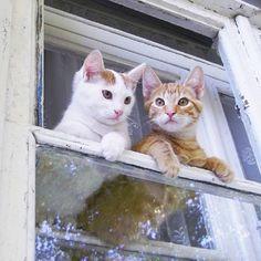 kittens in windows