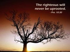 The righteous will never be uprooted.  Proverbs 10:30