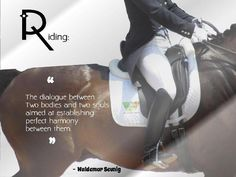 Dressage. perfect harmony. Pure synchronicity doesn't happen often but it's glorious when it does.