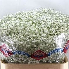Gypsophila Hora is great  for winter wedding flower arrangements! They add detail to the overall flower arrangemant and are great winter colours! Head over to www.trianglenursery.co.uk to find out more info! Great wholesale prices!