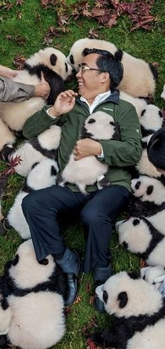 "Zhang Hemin — ""Papa Panda"" to his staff — poses with cubs born in 2015 at Bifengxia Panda Base."