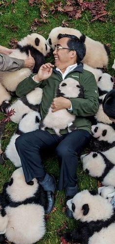 "Zhang Hemin — ""Papa Panda"" to his staff — poses with cubs born in 2015 at Bifengxia Panda Base."