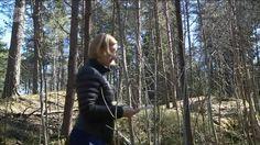 Uutisvideot: Vanhanaikainen kartta on turistin ystävä