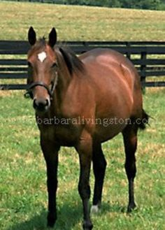 Glorious Song (CAN) 1976-2003 B.m. (Halo (USA)-Ballade (USA) by Herbager (FR) Canadian Horse of the Year; Canadian (2x) & American Champion Older Mare.  Winner of the La Canada S (G1), Santa Margarita Invitational (G1), Spinster S (G1), Top Flight S (G1) Dam of Rahy (G2 winner & sire of 92 SWS), Singspiel (multiple G1 winner & sire of 98 SWS)
