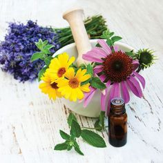 Easiest Medicinal Herbs to Grow | Use this guide to grow and use medicinal plants such as echinacea, tulsi and chamomile.