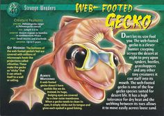 Name: Web-Footed Gecko Category: Strange Wonders Card Number: 40 Front: Web-Footed Gecko Strange Wonders card 40 front Back: Web-Footed Gecko Strange Wonders card 40 back Trading Card: None Lizard Types, Wildlife Biologist, Monster Book Of Monsters, Small Insects, Wild Creatures, Animal Species, Creature Feature, Animal Cards, African Animals