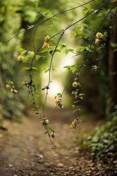 Flowers in the forest. Beautiful Flowers Wallpapers, Beautiful Nature Wallpaper, Photo Background Images, Photo Backgrounds, Nature Pictures, Beautiful Pictures, The Secret Garden, Image Nature, Walk In The Woods