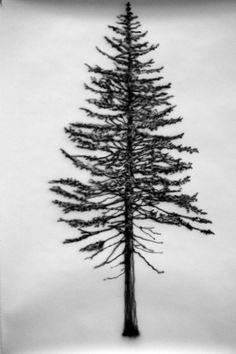 "Eamon O'Kane, Tree #10, 2014, Acrylic on paper, 39.4"" x 27.6"". Courtesy the Artist and RARE Gallery, New York © 2014 Eamon O'Kane"