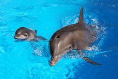 Huf n Puf and Bella at Siegried & Roy's Secret Garden and Dolphin Habitat