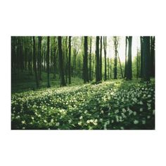 Spring forest view, Rugen Island, Germany Canvas Prints by National Geographic