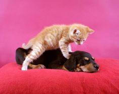 Kitty massage