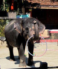Phuket Zoo. Thailand. http://tonelepsoe.smugmug.com/
