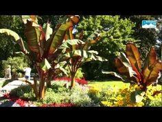 Blumenpracht im Königlichen Kurgarten Bad Reichenhall