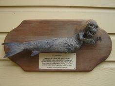 fiji mermaid caught in 1945 Paranormal Stories, Fiji, Mermaids, Discovery, Henna, Piercing, Creepy, Horror, Survival