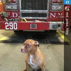 #mulpix  #Repost @red_posa_fdny with @repostapp.
