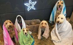 Pet Groomers Recreate Adorable Nativity Scene With Dogs Pet Shop, Really Funny Pictures, Christmas Nativity Scene, Nativity Scenes, Christmas Ideas, Funny Christmas, Christmas Decor, Christmas Tree, Holiday Decor