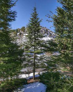 Mon beau sapin... 🎶 roi des forêts... #ehmej #cedars #mechwar #lebanon #village
