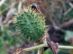 Antietam Battlefield: Mumma Farm (ouch! more thorns!) by DUCKofD3ATH, via Flickr
