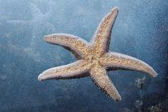 Starfish On Blue by Ezio Armando, via 500px