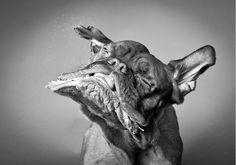 Carli Davidson – Shake Fotografien