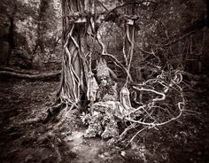 The Puppetry Of Fools - Wonderland- Complete Collection - Kirsty Mitchell Photography