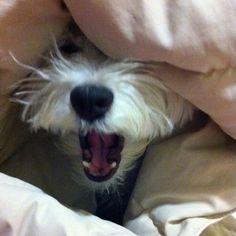 Ahhh....que sono!!!!!