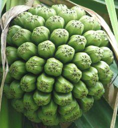 Hala fruit