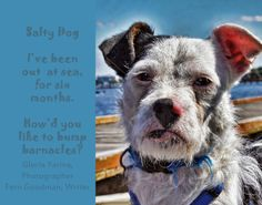 Parson Brown Terrier mating call! Salty Dog, short, short ditty from CAPTURED...THE LOOK OF THE DOG