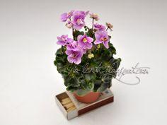 Fay's Madeline (F. Wagman) Single-semidouble pink two-tone pansy. Dark green girl foliage. Miniature. Простые и полумахровые двутоновые розово-лиловые анютки. Темно-зеленая гел-листва. Миниатюра.