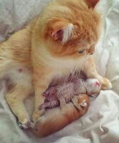 Mommy kitty with her precious little baby kitties