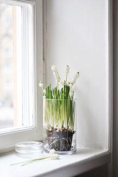 pärlhyacint-vårlökar-inredning-vår
