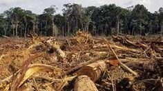 La France se déforeste-t-elle ? Tropical Forest, Forest Service, Environmental Issues, Nature Reserve, Digital Technology, Destruction, Change The World, Kenya, Conservation