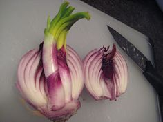 Growing Sprouted Onions