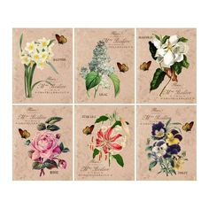 Flower Garden - Art Prints - 6 Print Set - 8x10 Prints - Vintage Style Flowers and Butterflies - French Country - Cottage Style