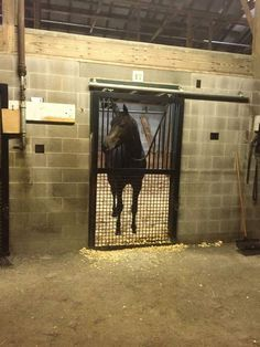 Golden Horn has arrived safely in USA (Photo : Michael Curran) @ClaireNovak  @BreedersCup  @TheJockeyClub