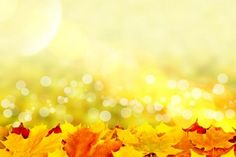 Sunny autumn day - (#118226) - High Quality and Resolution Wallpapers on hqWallbase.com