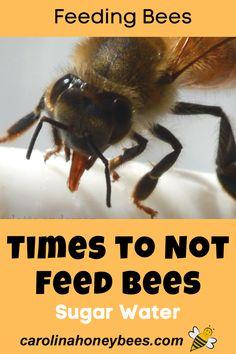 Do Bees Have Knees, Honey Bee Hives, Honey Bees, Bee Syrup, Feeding Bees, Beekeeping For Beginners, Bee Boxes, Backyard Beekeeping, Bee Farm