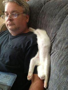 猫あるある13