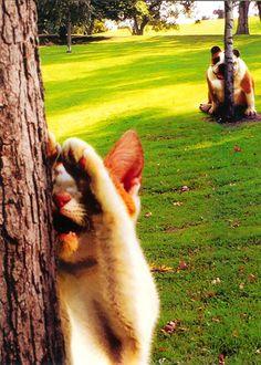 cat/dog hide-n-seek..... lol! http://www.cafepress.com/tlconline
