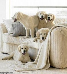 We Match The Couch - funnydogsite.com #dogs #funny #cute