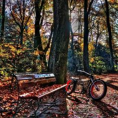 Bürgerpark in Bremen, Bremen