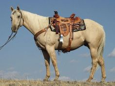 """Blade"" is a very nice palomino gelding.  An extra gentle horse that has been used outside and is working well in the team roping.  Blade is family gentle, but can still do a day's work with ease."