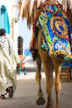 Ann-Sophie Falter, Egypt