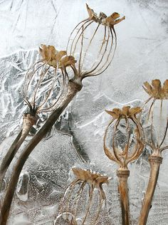 Blumen Poppy Seed Pods in Ice by John Bromley Cheer Up Your Window This Winter With A Backyard To Gr All Nature, Seed Pods, Patterns In Nature, Natural Forms, Land Art, Planting Seeds, Winter Garden, Botanical Art, Dried Flowers