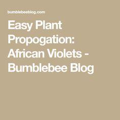 Easy Plant Propogation: African Violets - Bumblebee Blog