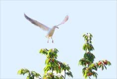 Ob sich diese Möwe wohl eine Kirsche pflücken wird? Bird, Summer, Animals, Kinds Of Birds, Summer Time, Animales, Animaux, Birds, Animal