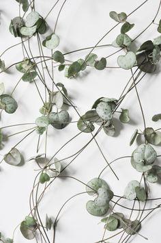 plant series « studio joop