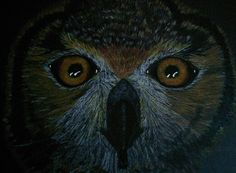 Bengal Eagle Owl on black paper in coloured pencil by Lynda Colley Originals