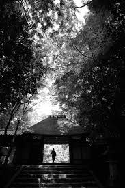 Image result for lensculture exposure awards tree