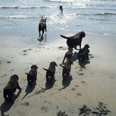 Ok puppies. 15 minute swim then it's nap time!